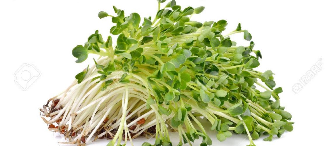 55881285-heap-of-alfalfa-sprouts-on-white-background